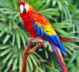 parrot-0016