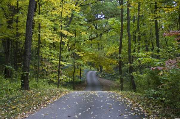 Early-Autumn-road-4ca5e92bb4a73_hires.jpg